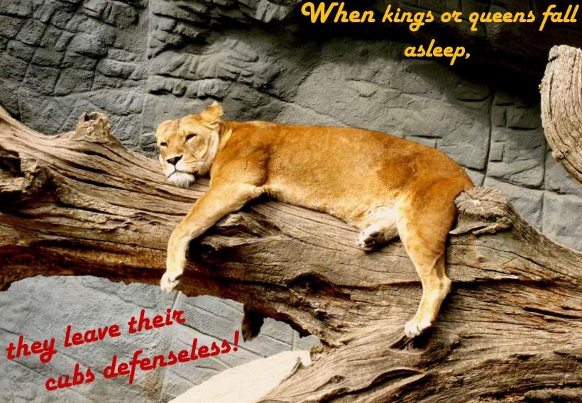 041718-sleeping-lions.jpg